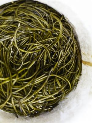 Seaweed5