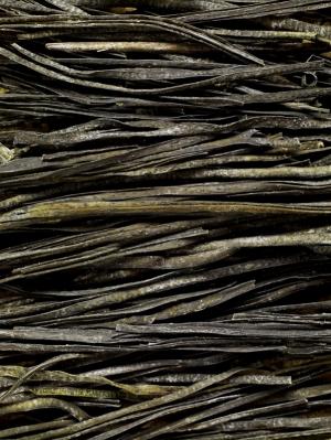 Seaweed8