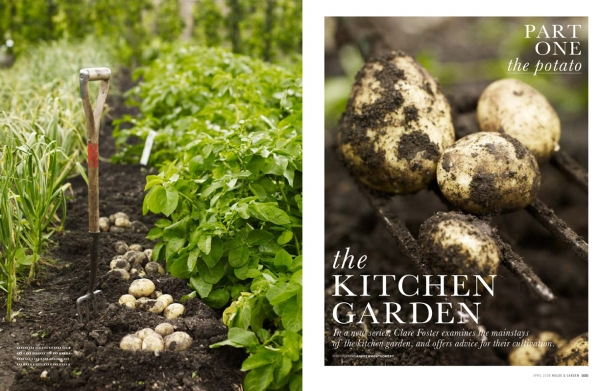 pkitchengarden-potatoes-2