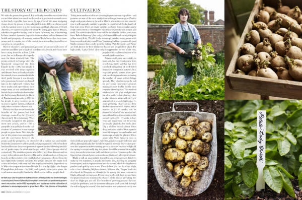 pkitchengarden-potatoes-3
