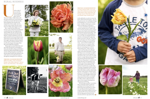 TulipsTwo.jpg