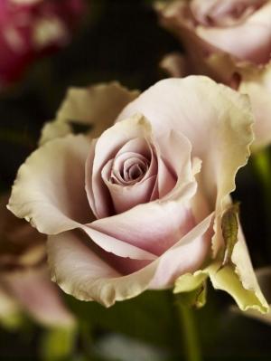 Florist5