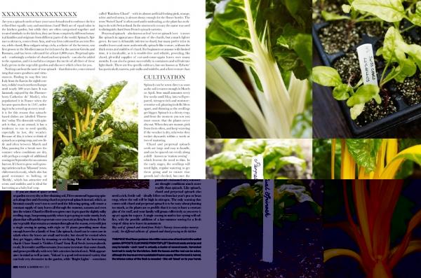 06-12pkitchengarden-spinach-3