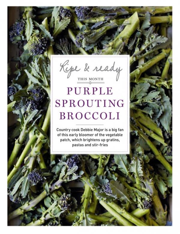 BroccoliOne.jpg
