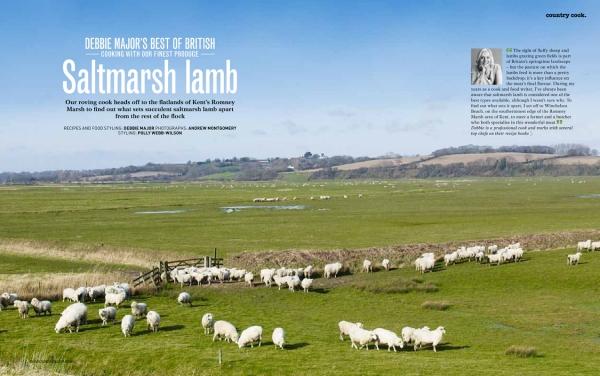 LambOne.jpg